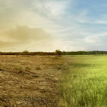 Landscape image of a green healthy field merged in the centre with a dry unhealthy field.